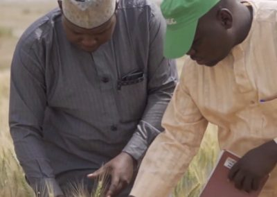 Propelling the Nigerian Wheat Value Chain to Self Sufficiency
